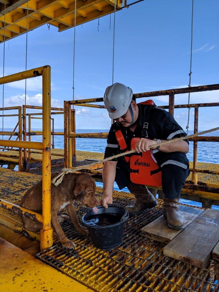 Рабочие буровой платформы спасли собаку (4)