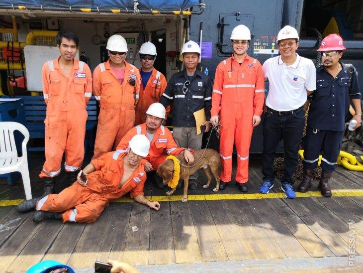 Рабочие буровой платформы спасли собаку (5)