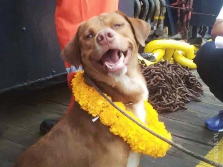 Рабочие буровой платформы спасли собаку (7)