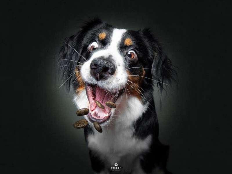 Собака-пожирака (4)