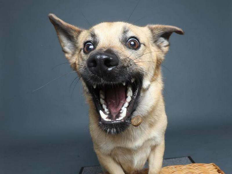 Собака-пожирака (12)