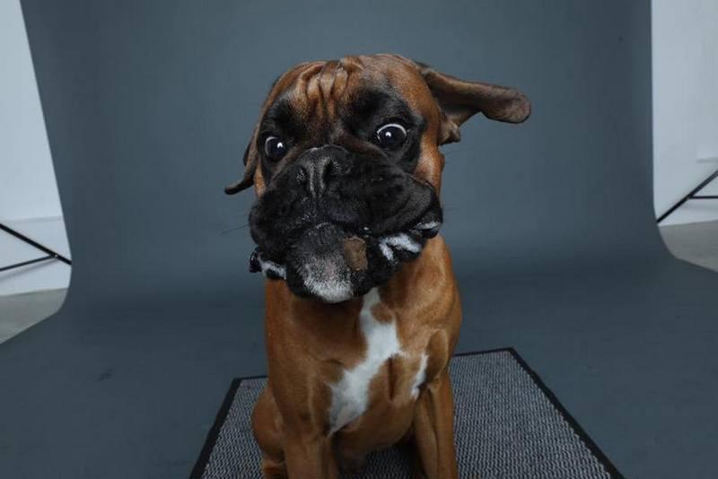 Собака-пожирака (10)