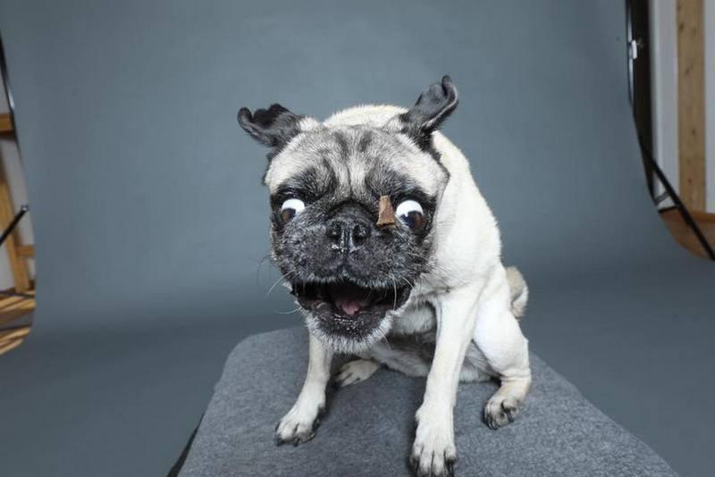 Собака-пожирака (9)