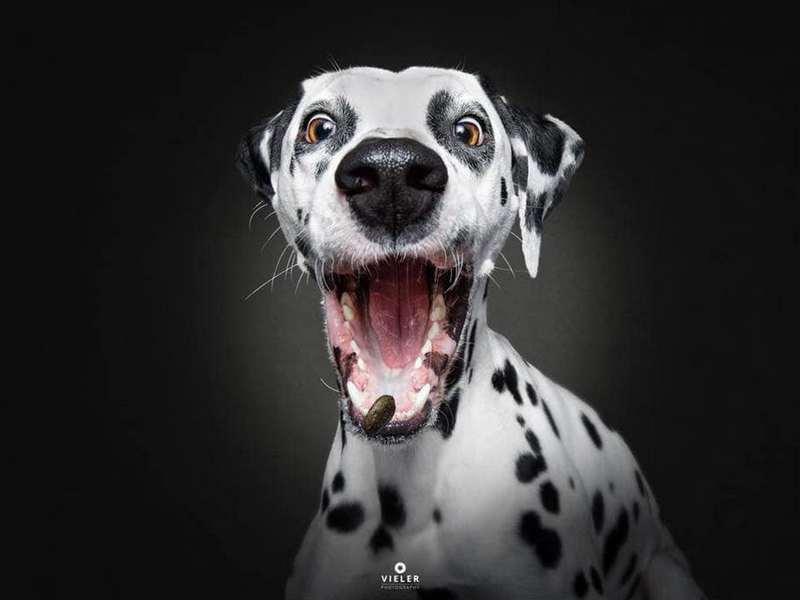 Собака-пожирака (8)