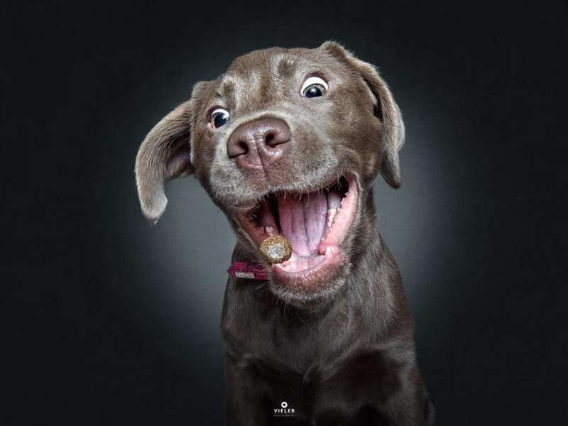 Собака-пожирака (7)