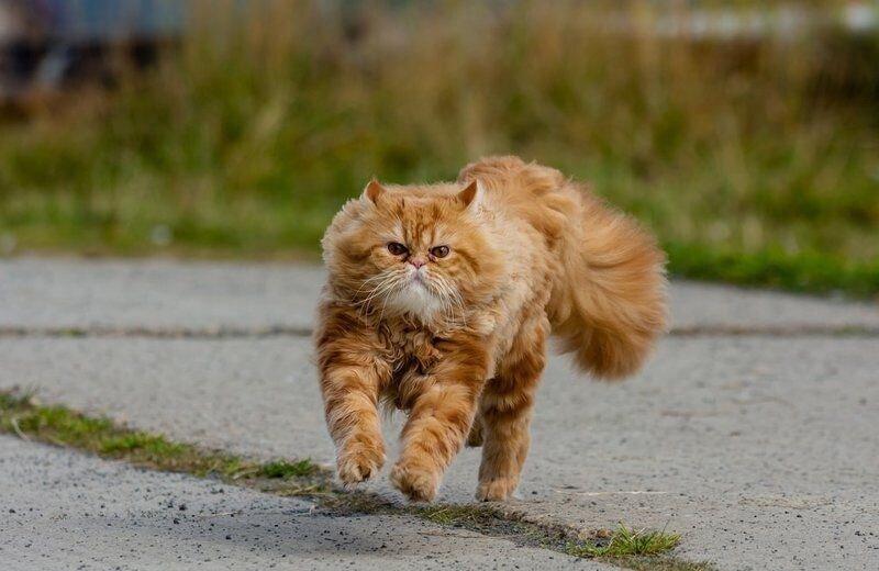 Как рыжий кот на голубей охотился (7)