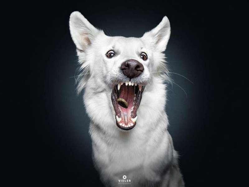 Собака-пожирака (5)