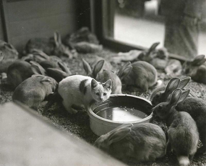 В гостях у кроликов