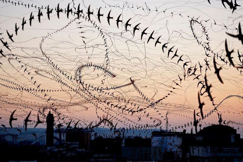 След птицы