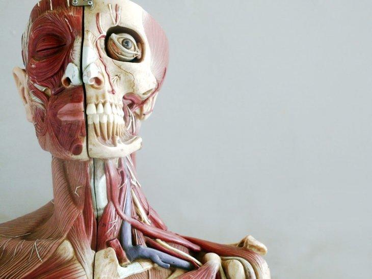 Интересные факты о человеческом теле (1)