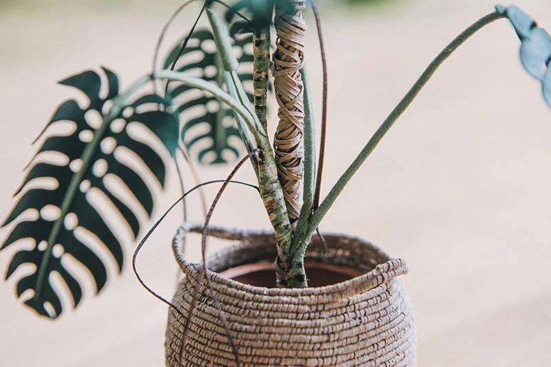 В это трудно поверить, но эти растения выполнены из бумаги (6)