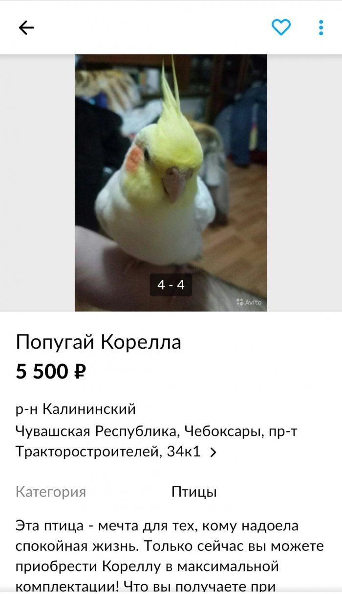 Необычное объявление о продаже попугая (1)