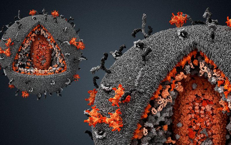 Что говорит наука о вирусах (1)