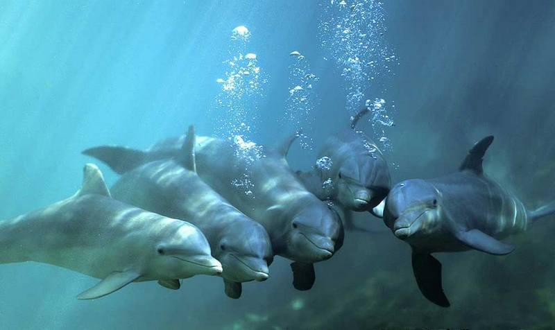 Интересный эксперимент с дельфинами