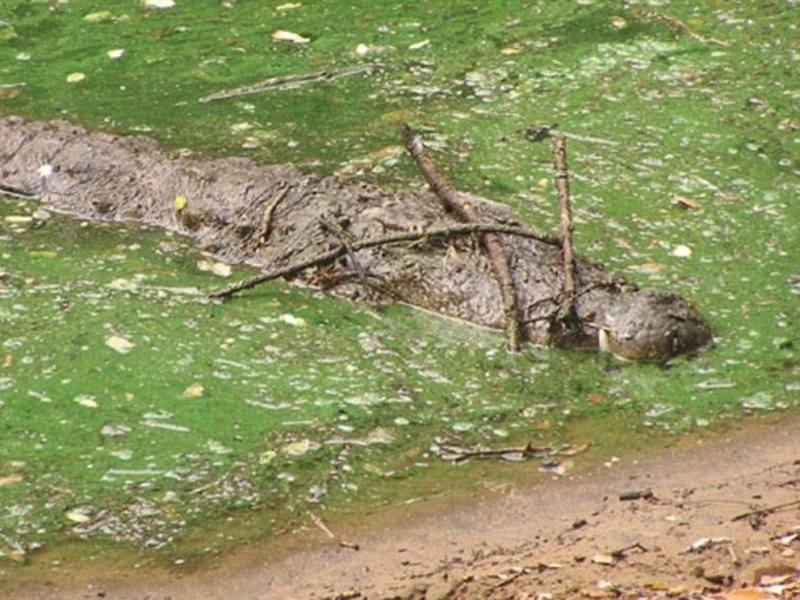 Хитрый крокодил