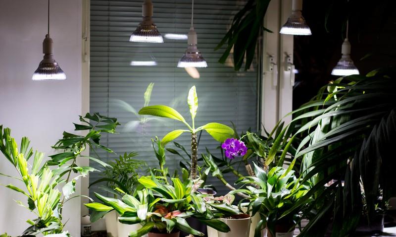 LED-освещение для растений, рекомендации по выбору